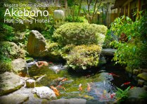 Relaxing Koi Pond and Japanese Garden
